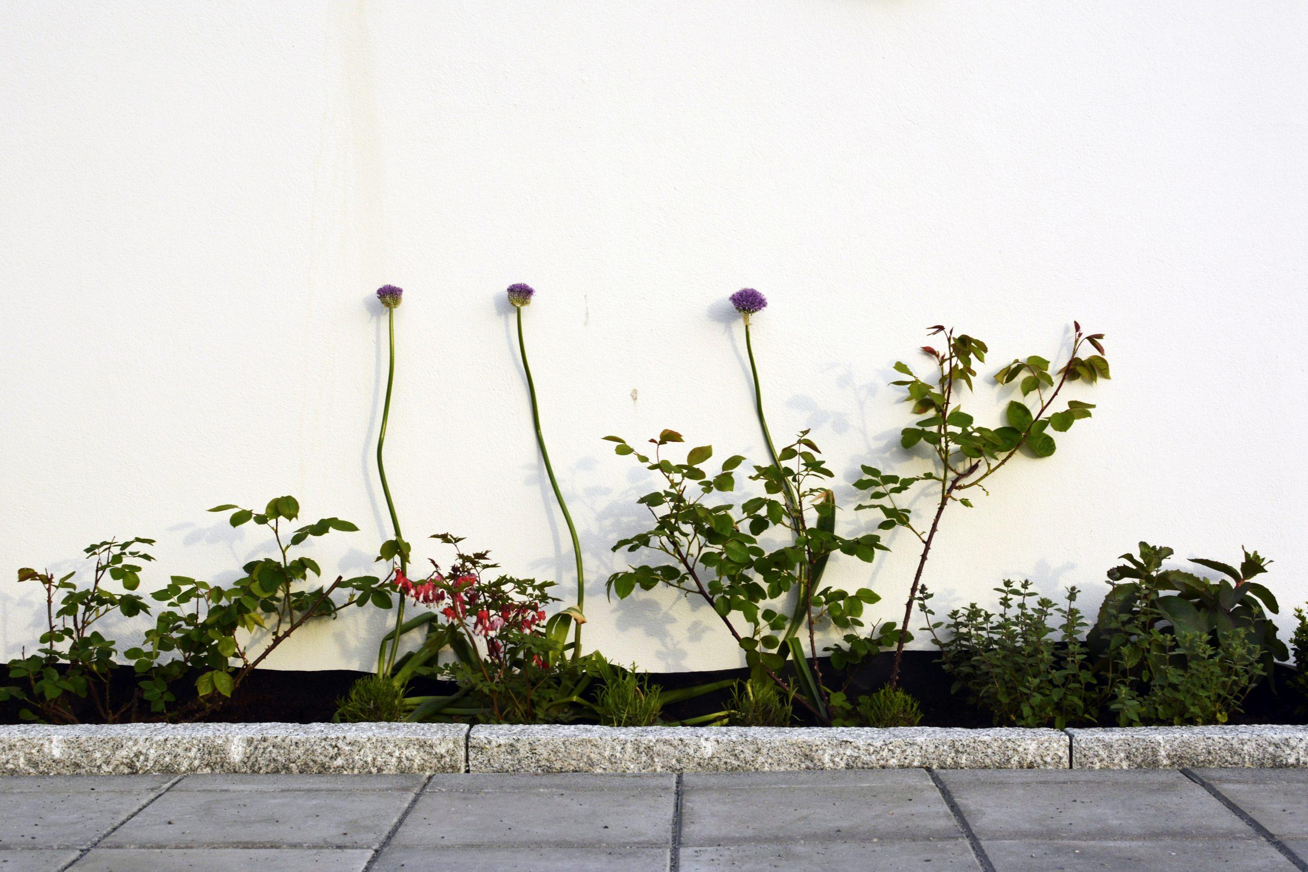 Villa J-plantering-inobi